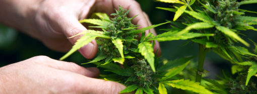 Diner-conférence sur le cannabis médical